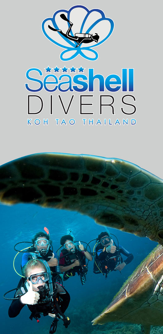 Stickers – Seashell Divers